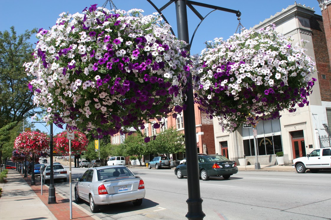 Municipal Hanging Flower Baskets : Baskets and liners