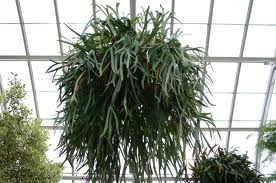 staghorn fern 1 labeled for reuse