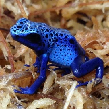 Reptile & Amphibian Substrate