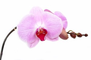 Orchid Care Resources