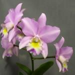 Ron Midgett, New Earth Orchids, Santa Fe, NM