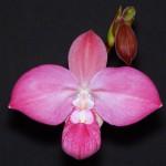 Gyorgy Nagy, Michigan Orchid Society, MI