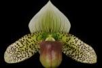 Graham Wood, Lehua Orchids, Mountain View, HI